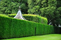 Landscaping Software - Offering Early View of Completed Project Hedge And Pavilion Outdoor Rooms, Outdoor Gardens, Outdoor Living, Beautiful Landscapes, Beautiful Gardens, Boxwood Landscaping, Evergreen Hedge, Landscaping Software, Different Plants