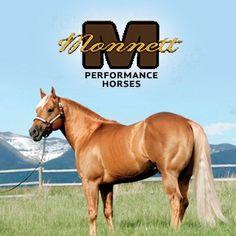BHH Media » STALLIONS  Monnett Performance Horses