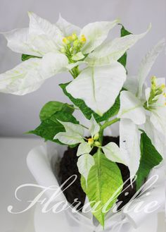 White Wafer Paper Poinsettia Cake | Floralilie Sugar Art