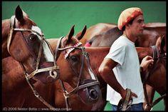Argentine Polo. En la cría de caballos de polo hay tres elementos fundamentales a tener en cuenta para un caballo: el modelo, su aptitud, y su temperamento. Estos tres elementos son muy buscados por los criadores ...