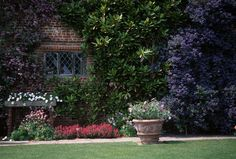 Sissinghurst Ceanothus 'South Mead'