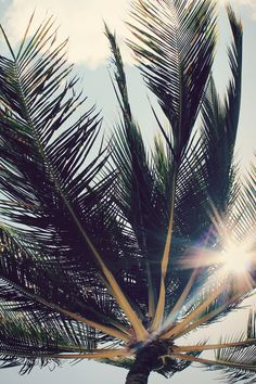 Palm trees swaying lazily in the sun-filled sky. So California.