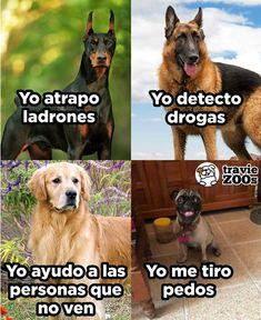 Sin su ayuda la estabilidad del medio ambiente no sería la misma Memes Hilariantes, Funny Animal Memes, Dog Memes, Best Memes, Funny Dogs, Funny Animals, Funny Memes, Animal Jokes, Mexican Memes