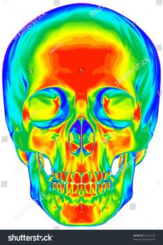 Thermal Image Human Skull Isolated On Stock Illustration 87528130 Art Sketches, Art Drawings, Psychadelic Art, Art Alevel, Psychedelic Drawings, Colorful Skulls, Dark Artwork, Skull Painting, Chalk Art