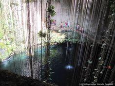 Cenote Ik Kil, no México.  Para os maias, cenotes eram lugares sagrados, abrindo portas para o submundo, e locais de sacrifício. Hoje, os cenotes são lugares cheios de misticismo cultural e natural. Um destes é o Cenote Ik Kil. O cenote é uma fonte natural dentro de uma caverna, cujas paredes estão cobertas com vegetação exuberante e onde você pode desfrutar da frescura das suas águas.