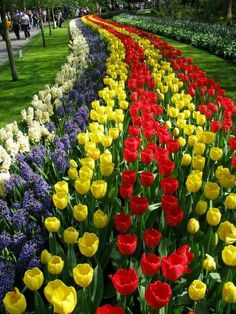 Flower Park Keukenhof, The Netherlands Amsterdam, with acres of flowers, opening on March 2016 Tulips Garden, Tulips Flowers, Pretty Flowers, Spring Flowers, Blossom Garden, Tulip Fields, Most Beautiful Gardens, Plantation, Spring Garden