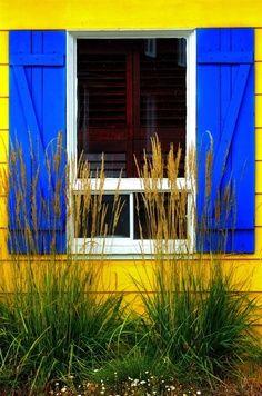 COULEUR FLASHY- IMAGE J'ai trouvé cette image par hasard et je l'ai trouvée représentative du contraste jaune-bleu.