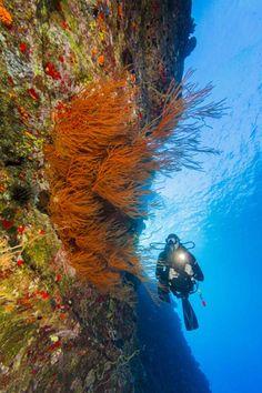 6 Ripping Drift Dives | Scuba Diving Magazine | Maui