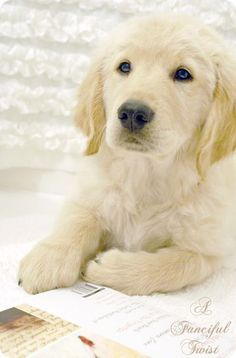 Golden, who (along with his beautiful brother) brings special Heart to A Fanciful Twist. :)