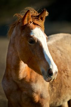 Wild Mustangs In Danger of Disappearing - great article with slideshow by treehugger.com