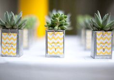 WEDDING FAVOR — individual succulent plants in tiny containers