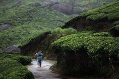 Feminine Silhouette Under the Rain by Christophe Jacrot. Christophe Jacrot, Parasols, Umbrellas, Smell Of Rain, Tea Culture, Sound Of Rain, Walking In The Rain, Portraits, Learn To Dance