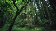 森の中に光が届いていてきれいな光景の壁紙
