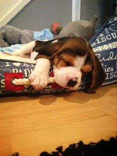 Love beagles!!!