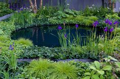Harpur Garden Images Ltd :: Marcus Harpur No Man's Land ABF The Soldiers' Charity Garden to mark the centenary of World War One. Low level green foliage planting with circular black water pool representing a flooded crater. Scirpus cernuus fibre optic grass, dwarf gunnera, rodgersia and Iris sibirica 'Dark Desire' and birch. Black stone back wall. Gold medal Design: Charlotte Rowe Sponsor Bechtel, Coutts and Co
