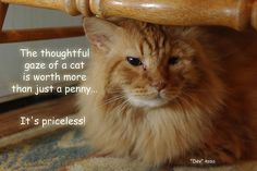 The thoughtful gave of a cat is worth more than just a penny... It's priceless! Robyn Stacey