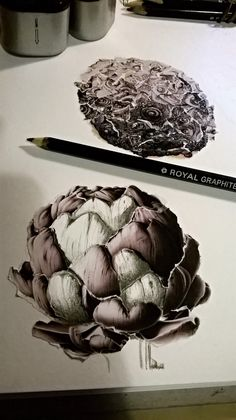 Sketched and collated, urchins and asparagus.