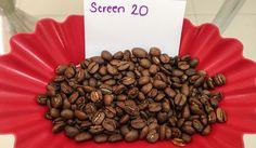 From Cerro Bueno Estate, a Screen 20 coffee. Notes to rich  dark chocolate, orange, and a bright acidity.   www.hondurascoffeefamily.com