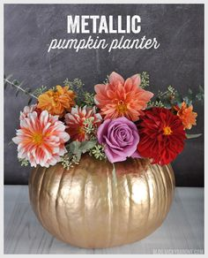 Place an arrangement of fall florals into a carved out pumpkin jazzed up with metallic gold paint. Get the tutorial at Vicky Barone Pumpkin Centerpieces, Thanksgiving Centerpieces, Floral Centerpieces, Floral Arrangements, Pumpkin Arrangements, Diy Thanksgiving, Metal Pumpkins, Painted Pumpkins, Fall Pumpkins