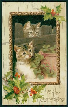 vintage Christmas cat postcard