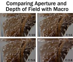 Comparing Aperture and Depth of Field for Macro and Close-Up Photography | Boost Your Photography #macro #photography
