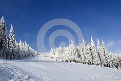 Frosty sunny winter day, snow-covered fir, mountain slope, the Jizera Mountains. Snow Mountain, Winter Day, Czech Republic, Sunnies, Stock Photos, Seasons, Mountains, Outdoor, Beauty