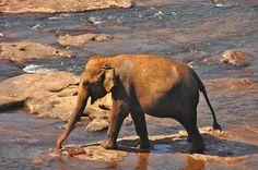 Evening bathe on the rocks