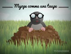 """#expressionsanimaux Savez-vous ce que signifie l'expression """"Myope comme une taupe""""? → Ne rien voir, être très myope. pic.twitter.com/TDRJAue3QG"""