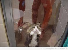 image drole chat douche