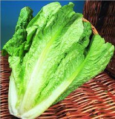 Vegetable - Lettuce - Lobjoits Green - 100 Seeds - Economy