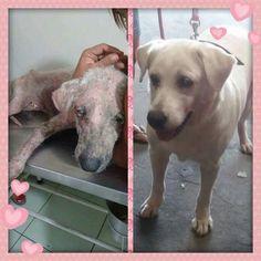 BONDE DA BARDOT: RJ: Nina foi resgatada pele e osso, agora está saudável e aguarda uma família responsável e amorosa!