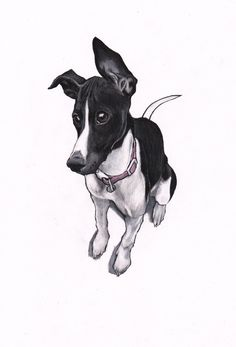 Pet portraits by Jim Griffiths https://www.etsy.com/shop/JimGriffithsArt?ref=hdr_shop_menu