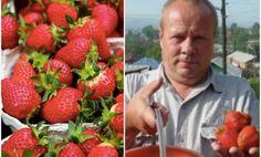 Nebude vás to stát ani korunu: Tuto radu mi poradil před několika lety tchán – každý zahrádkář potřebuje jen tyto zákládní 3 věci z kuchyně! – mojekrasa.net Strawberry, Fruit, Chata, Food, Essen, Strawberry Fruit, Meals, Strawberries, Yemek