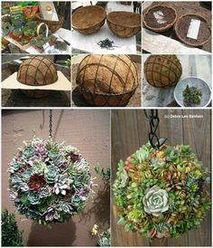 Create succulents ball