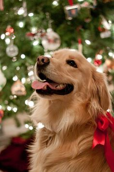 Holiday Gift Guide: Best Dog Accessories
