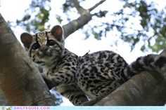 Daily Squee: Exploring the Canopy - Cheezburger