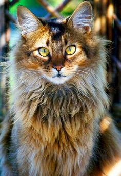 Que hermoso gato :)