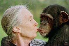 Dame Jane Goodall DBE - primatologist, ethnologist, anthropologist. Celebrated her 80th birthday today (3rd April 2014)