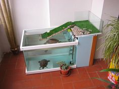 Aquariums Interior Design With Glass Fish Tanks 229 Aquatic Turtle Tank, Turtle Aquarium, Aquatic Turtles, Turtle Pond, Turtle Enclosure, Tortoise Enclosure, Turtle Terrarium, Aquarium Terrarium, Turtle Care