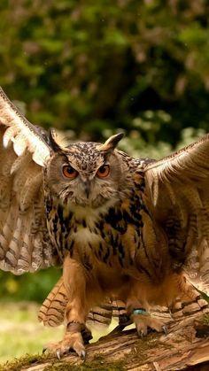 owl, wings, flapping, predator