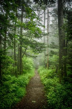 A misty morning along the Appalachian Trail, Roan Mountain, Tennessee. Planning on doing this hike in June!!! Who is with me?