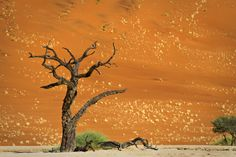 Deadvlei Valley, Sossusvlei, Namib desert