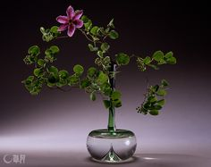 China root, Leather flower Container:Glass vase #ikebana #sogetsu