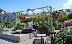 jardin sur le toit, pergola moderne, bassin d'eau, plantes vertes et fleurs multicolores