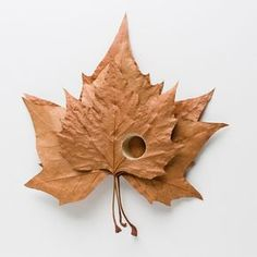 art-photographers.co.uk To truly appreciate the delicacy of Susanna Bauer's leaf sculptures, think of crunching a dead leaf in your hand, how it disentigrates into dust with the slightest effort. To work with dry and fragile leaves as a medium for crochet seems nearly impossible, but Baur some