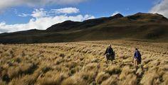 PRÁCTICA: Latin America es muy grande y tiene muchos peligros. Algunos problemas ecológicos son extinción, deforestación y contaminación. PERSPECTIVA: A la gente le importa proteger el medio ambiente.