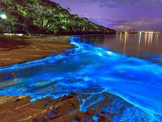 Luminous Lagoon, Trelawny, Jamaica