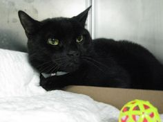 ****EXTREMELY URGENT****SLEEPY HARIS KILLED IN MORNING / FEB 17, 2013/ SUNDAY**OWNER LOST JOB**3 YRS OLD NEUTERED***      https://www.facebook.com/photo.php?fbid=558684460810057=a.563921090286394.135722.155925874419253=3  XXXX