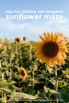Tips for Visiting Von Bergen's Sunflower Maze Best Places To Vacation, Places To Travel, Places To Go, Travel Destinations, Travel Tips, Vacation Ideas, Travel Ideas, Fun Activities For Kids, Family Activities