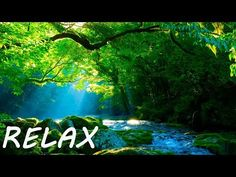 Soothing music to brighten up your day and beautiful nature scenery with cascades, lake and forest. Relaxing morning music and calming nature sounds to posit. Meditation Musik, Deep Meditation, Nature Music, Nature Gif, Relaxing Gif, Relaxing Music, Morning Music, Stress Relief Meditation, Yoga Music